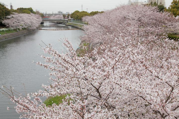 荒子川(名古屋市)