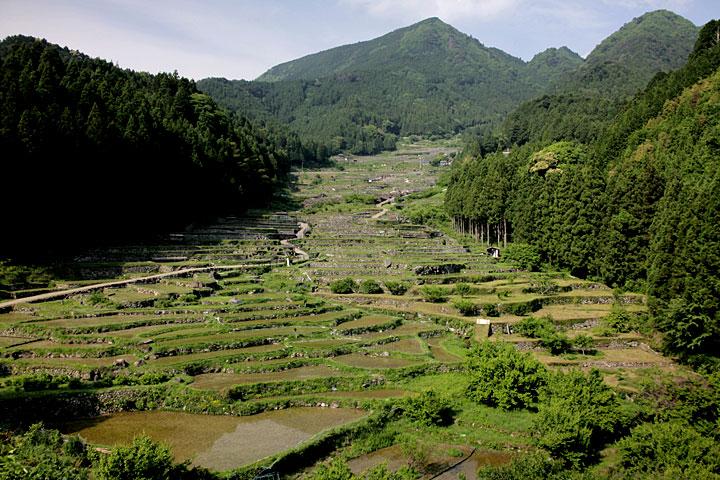 四谷千枚田 写真中央上 鞍掛山(標高883メートル)