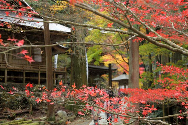 紅葉越しに見える本堂