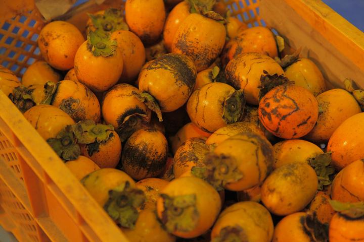 収穫された柿