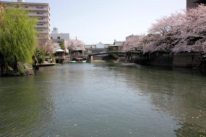 水門川と桜