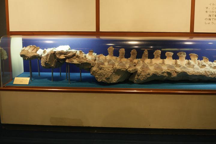 ヒゲクジラ(脊椎・ロッ骨)