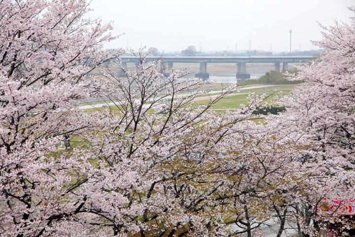宮川堤(伊勢市)