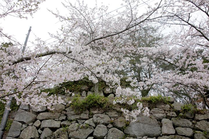 松坂城跡(松阪市)