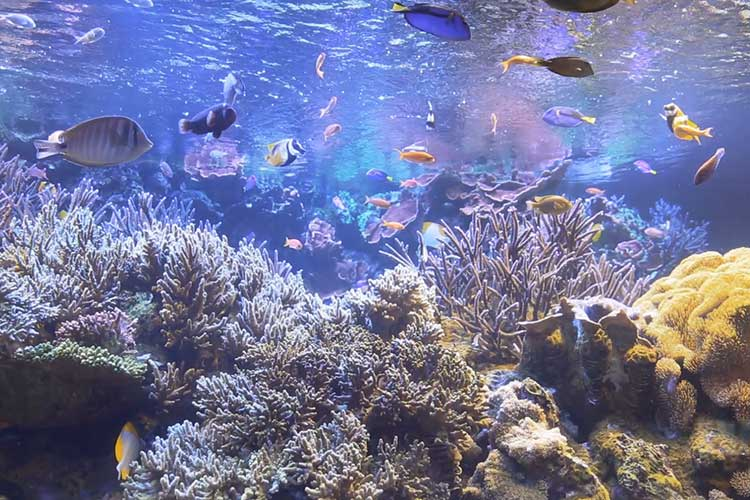 The sea of Ise-Shima(Toba Aquarium)