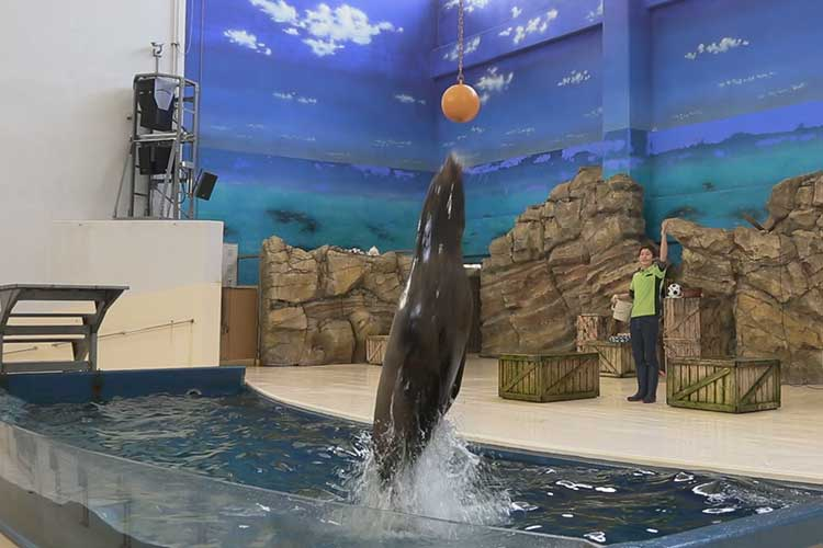 Show of a sea lion
