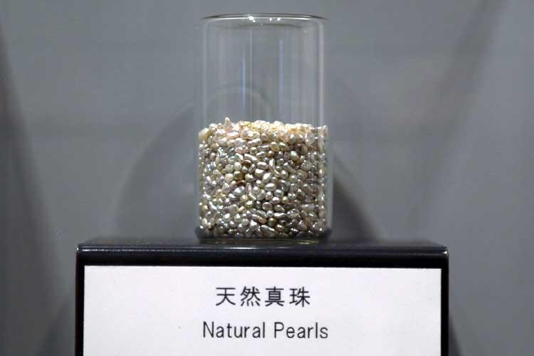 真珠博物館1F展示