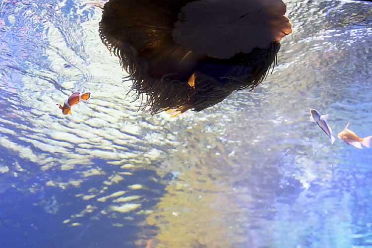 サンゴ礁水槽