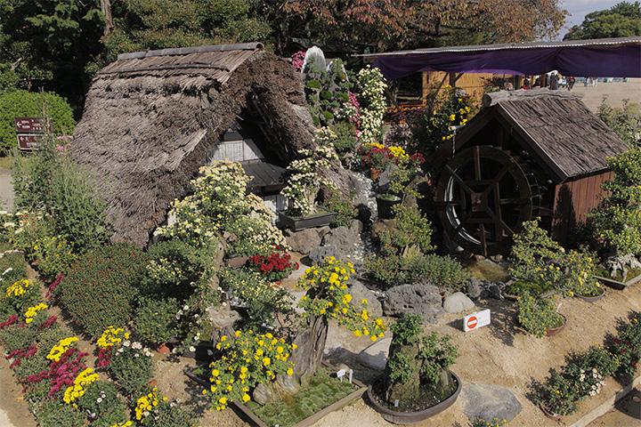 菊で飾られた水車小屋と茅葺の家