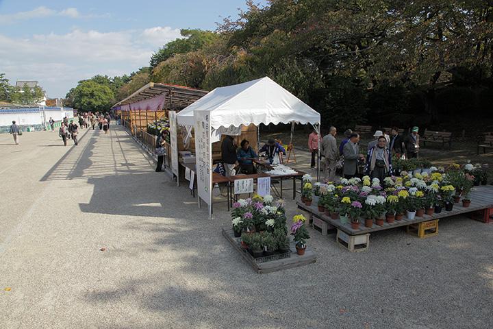 西の丸の菊花大会