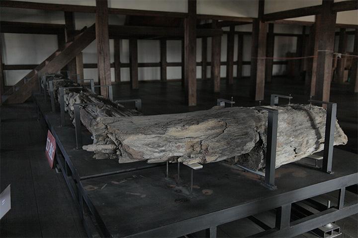 1階に展示されていた古木