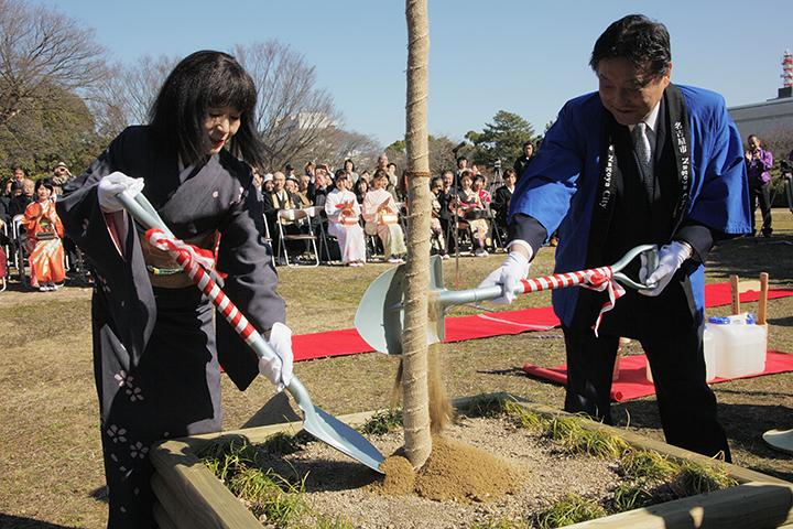 春姫桜に土入れを行う河村たかし名古屋市長と名古屋城文化フォーラム夢童由里子代表