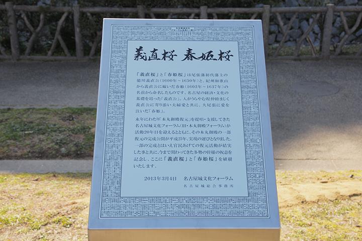 義直桜、春姫桜の銘板
