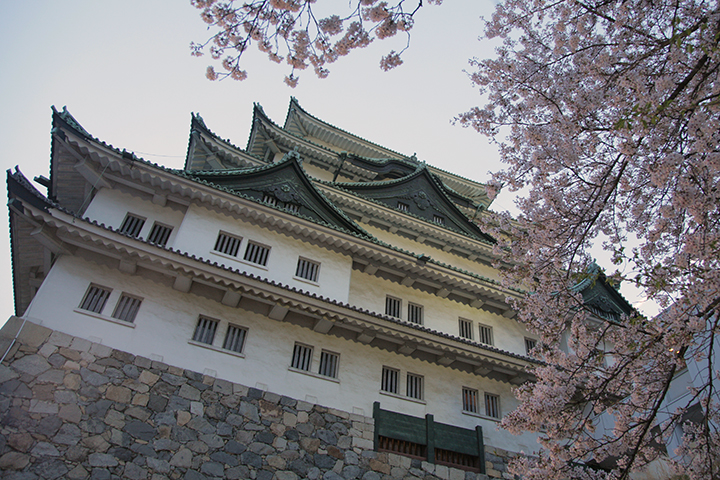 夕暮れ時の桜と名古屋城