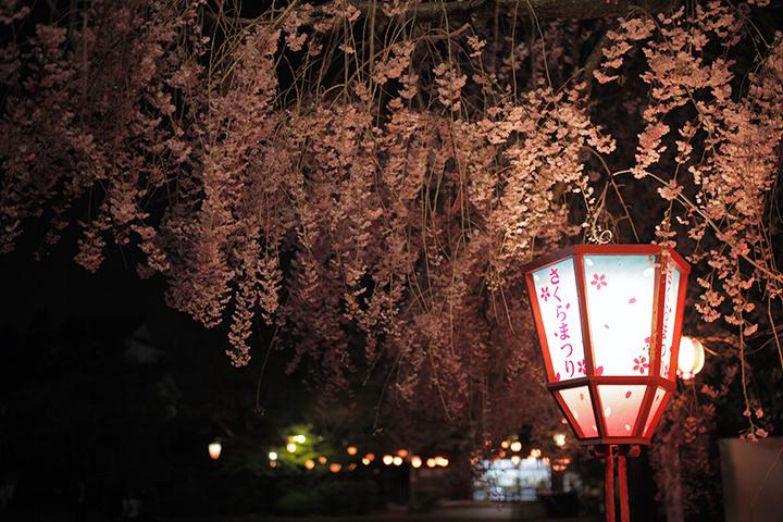 西の丸の夜桜