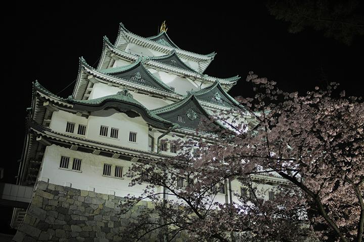 天守閣礎石側から見た天守閣と夜桜