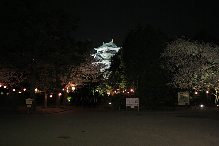 正門前から見た夜桜と名古屋城