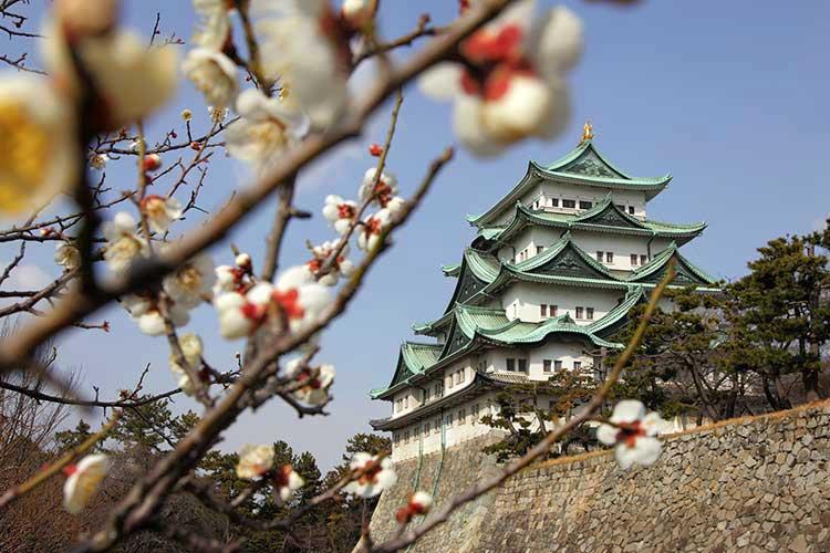 梅も開花した名古屋城