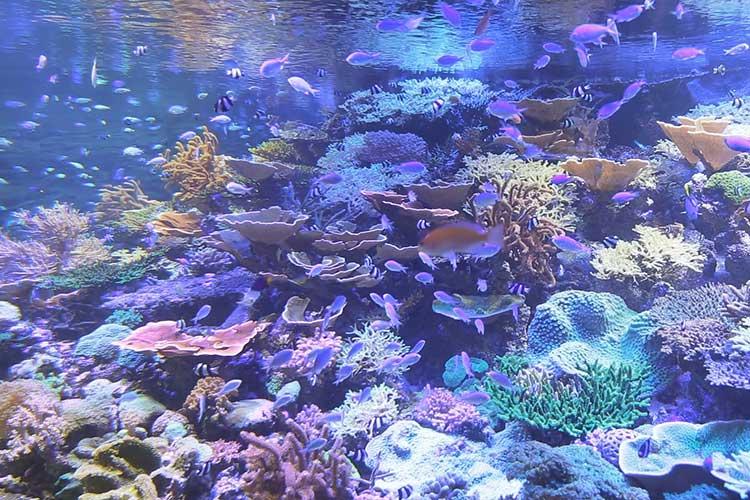 ライブコーラル(生体サンゴ)水槽