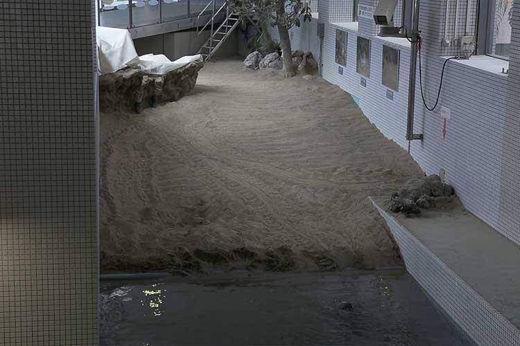 ウミガメ人工砂浜