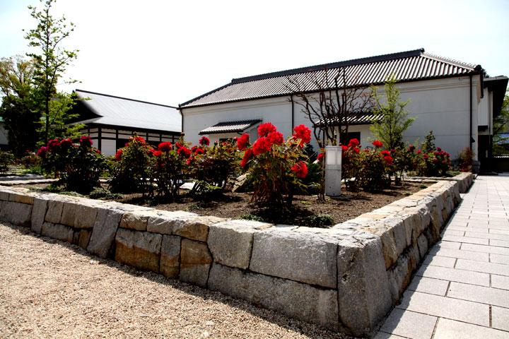 蓬左文庫前花壇に咲く牡丹 4月下旬
